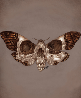 Death's-Head Hawkmoth. Graphite and Digital, 2019.