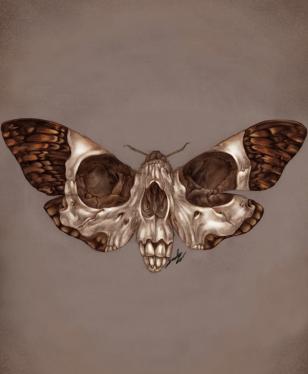 Death's-Head Hawkmoth. Graphite and Digital, 2019.