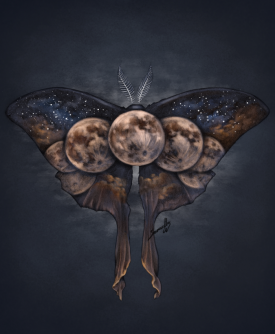 Luna Moth. Graphite and Digital, 2019.